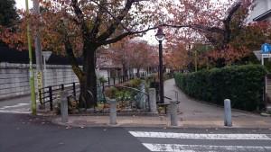 北澤緑道3